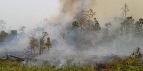 Kebakaran hutan dan sisa lahan hutan terjadi saat musim kemarau setiap tahun di Riau, Sumatera. Sebagian kebakaran disulut dengan sengaja. Beberapa membesar dan lepas kontrol. Foto: CIFOR