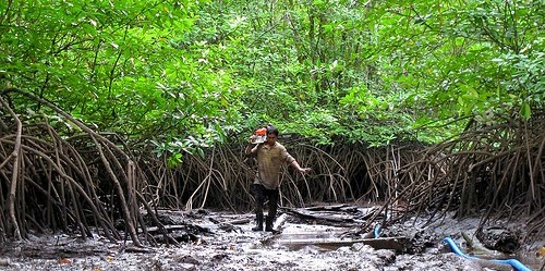 Wacana konservasi hutan mangrove sebagai potensi besar penyimpan karbon perlu mendapat perhatian pemerintah. Foto: Sigit Deni Sasmito/CIFOR