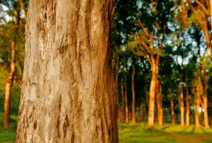 Investing in sustainable planted forests: Tools are available, but there's room for improvement