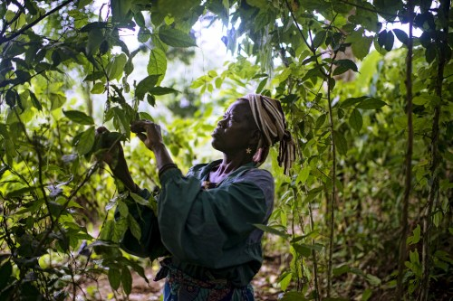 If forest users have clear incentives to work together, conflict could be reduced and the management of the Congo Basin's timber concessions, could be improved, according to a new CIFOR study. Photo: CIFOR