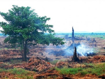 Political economy of fire and haze: Moving to long-term solutions