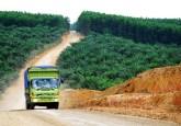 Ikrar nol deforestasi tidak berarti apa-apa jika realitas pelik tidak terselesaikan. Ryan Woo/CIFOR