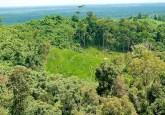 La Declaración de Nueva York sobre los Bosques 2014 se fijó una meta audaz: un mundo sin deforestación. Pero no estableció un plan que indicara cómo lograrlo.Foto CIFOR.
