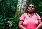 Los mismos bosques amazónicos podrían utilizarse para la extracción tanto de madera como de castañas, si se siguen ciertas reglas. Foto CIFOR.