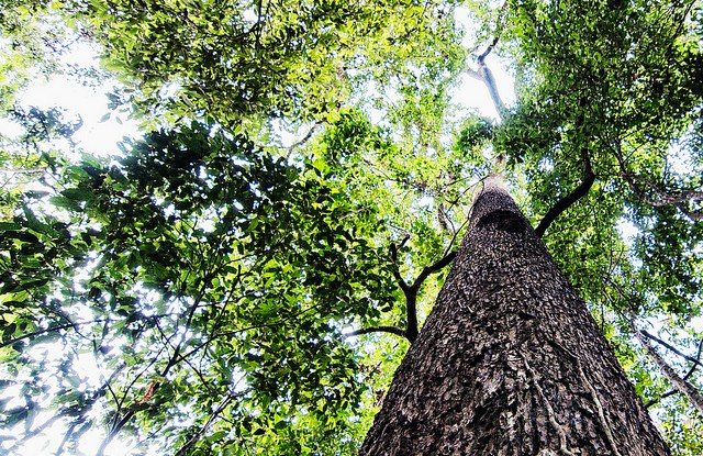 Award-winning CIFOR research explored land tenure among forest communities in Ecuador and Peru