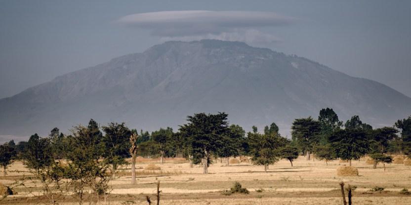 Les arbres de l'Éthiopie peuvent être un chemin vers le développement économique, si les plantations sont élargies et améliorées. CIFOR/Ollivier Girard