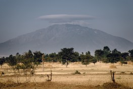 The trees of Ethiopia may provide a path to economic development, if plantations are expanded and improved. CIFOR / Ollivier Girard