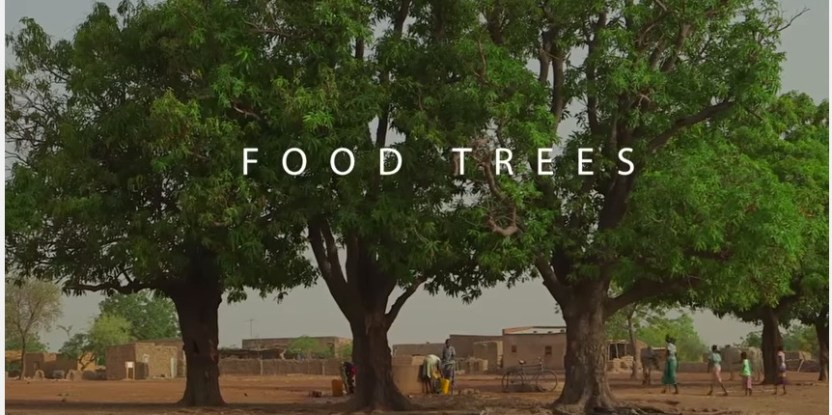 Many trees across the world provide people with food and other benefits.