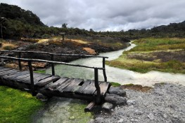 Objectives of restoration include protection of water catchments and strengthening biodiversity. Neil Palmer/CIAT