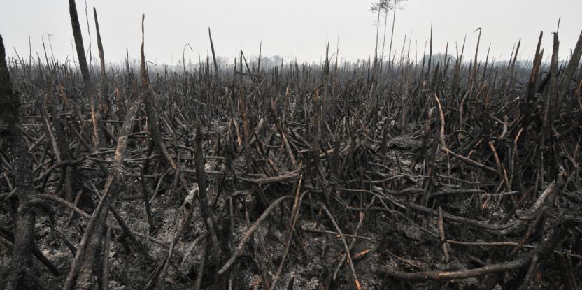 La saison des pluies a mis fin à la plupart des feux. Toutefois, la crise doit servir à développer des solutions durables afin que les incendies cessent de se répéter année après année. Aulia Erlangga/CIFOR