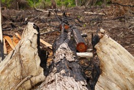 Program restorasi ekosistem hutan Indonesia saat ini diarahkan pada tata kelola lahan, penataan drainase termasuk perbaikan regulasi pemanfaatan lahan. Nanang Sujana/CIFOR
