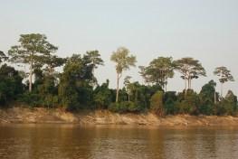 Skema Pembayaran Jasa Lingkungan dan REDD+ sama-sama menawarkan perlindungan bagi hutan.