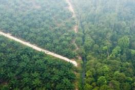 Kabut asap menyelimuti bentang alam Riau. Terjadinya karhutla sepatutnya memperhitungkan mekanisme pemantauan dan penegakkan kebijakan.