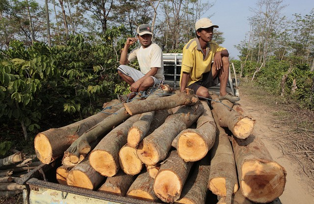 Over 90 percent of the timber used in Indonesia's domestic market is from the informal logging sector, rendering it illegal.Dita Alangkara CIFOR