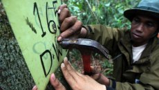 Local projects shape national REDD+ strategies