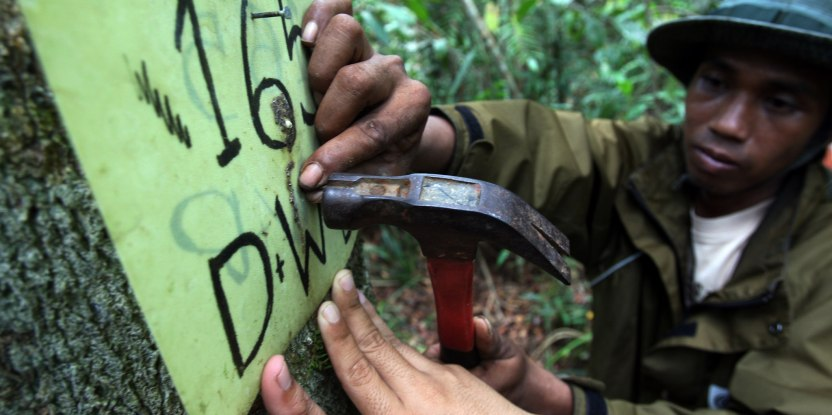 Local REDD+ work in Indonesia includes tree monitoring in Central Kalimantan.  Achmad Ibrahim CIFOR