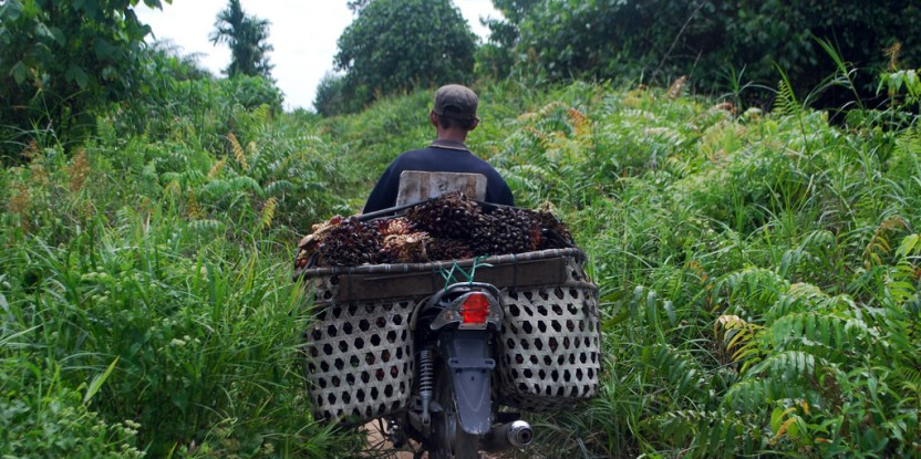 A villager transports oil palm fruits from a plantation in Jambi, Indonesia. Palm oil is one of the $500 billion worth of forestry commodities produced worldwide each year.