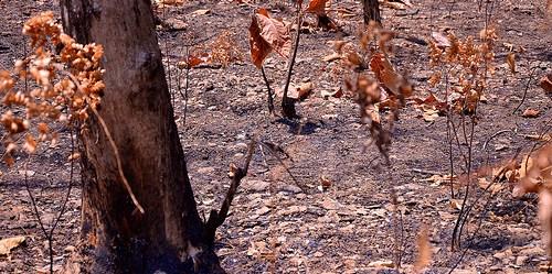 Pohon jati, salah satu jenis tanaman industri yang dapat diterima baik oleh masyaralat.