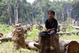 A child rests amid felled trees in Central Kalimantan, Indonesia.