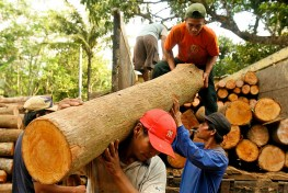Unloading teak logs in Jepara, Central Java, Indonesia. Photo by Murdani Usman for CIFOR.