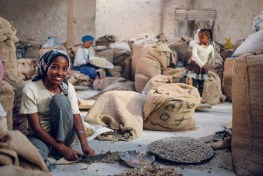 Eighty percent of Ethiopians live in rural areas and depend on landscapes, including gum collected from acacia trees and sorted for export.