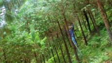 Lecciones desde América Latina para la restauración de paisajes forestales