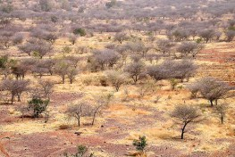 Hutan kering di Afrika mencakup 54% dari benua dan mendukung 64% dari penduduknya melalui penyediaan berbagai barang dan jasa lingkungan.