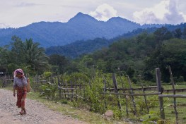 A Lubuk Beringin villager walks home from the forest at Lubuk Beringin village, Bungo district, Jambi province, Indonesia. The villagers have adhered to and implemented a number of rules in regard to forest management, such as preserving protected forests, rubber forest areas and water sources.