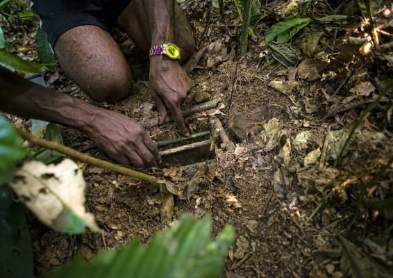 Tamanga Ekwayoli, a hunter, prepares a pitfall trap in the Tumba–Lediima Reserve, Democratic Republic of Congo.