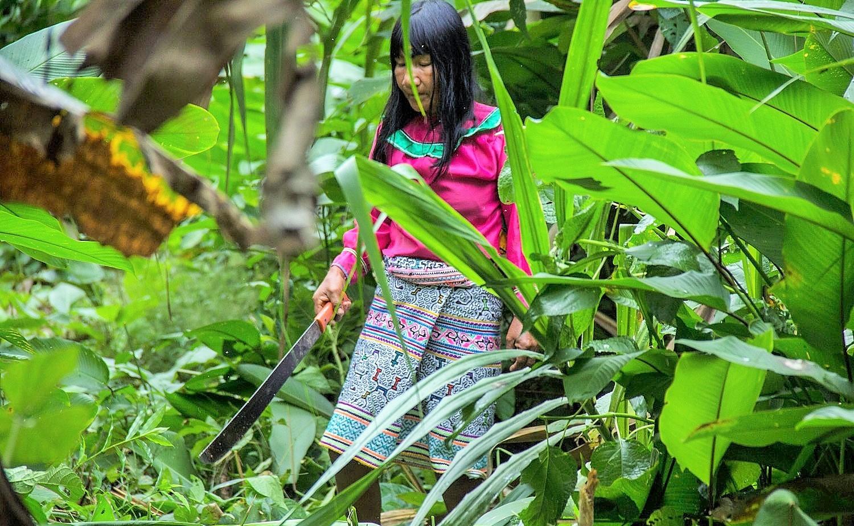 Deforestación en Perú: ¿Son los pequeños productores los verdaderos responsables?