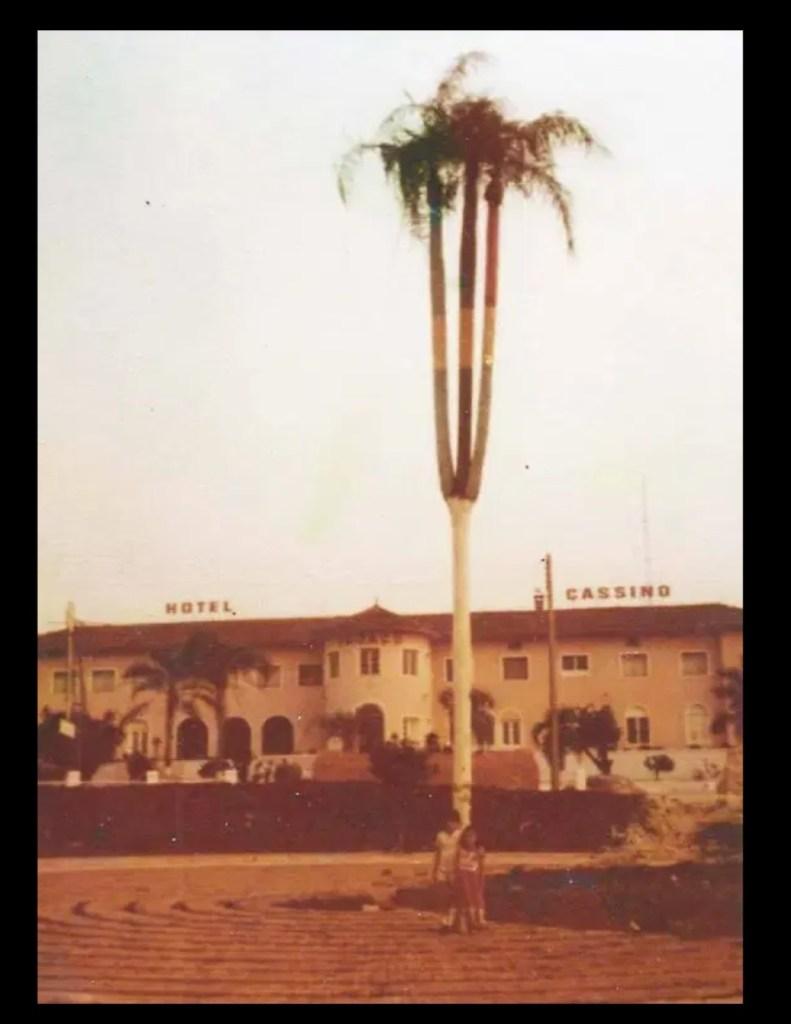 Palmeira do Tri