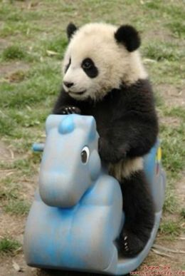 panda-on-ride