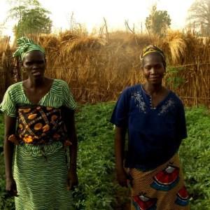 Sara şi semințele speranţei. Povestea semințelor de roșii transilvănene ce au dat rod în Senegal.