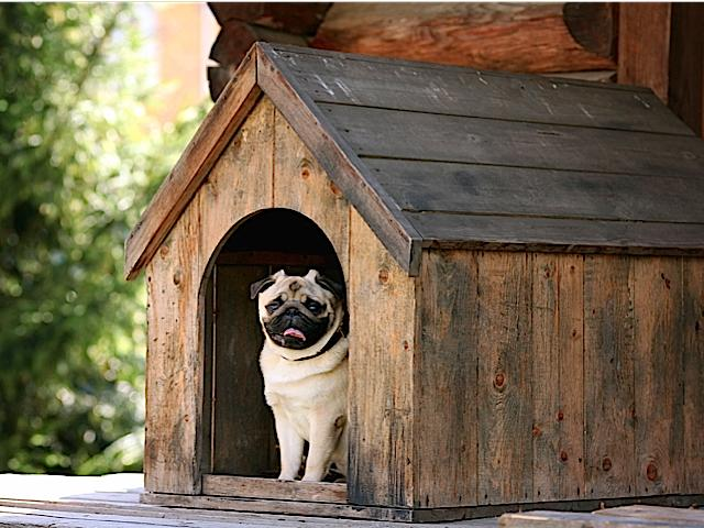 In the doghouse? Our website will help you find the words to say you're sorry.