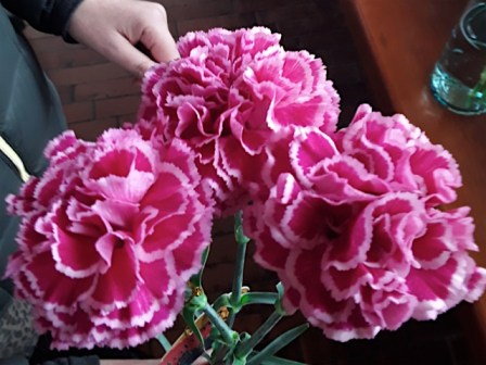 Nobbio cherry carnations