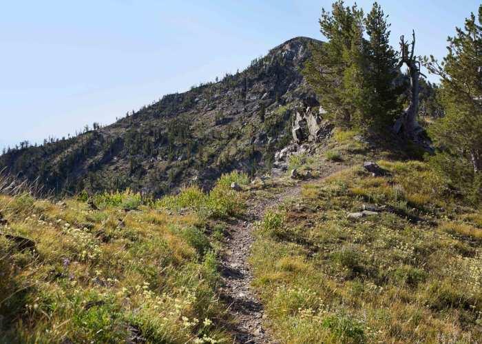 trail running path