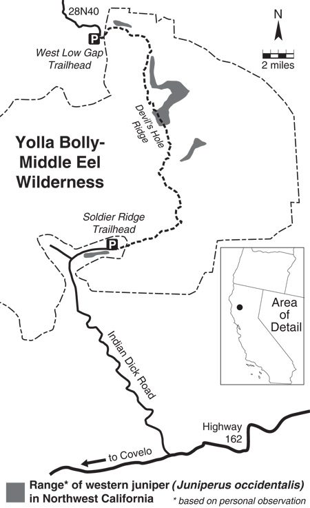 an essay on western junipers in eastern oregon Juniper management effectiveness monitoring: in the late 1990s the oregon watershed enhancement board of the limited nature of oweb restoration dollars and the endless acres needing juniper treatment in central and eastern oregon to contrast the management of western juniper.