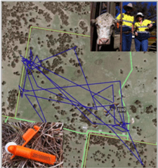 Wireless livestock tracking using Taggle ear tags Image - UNE