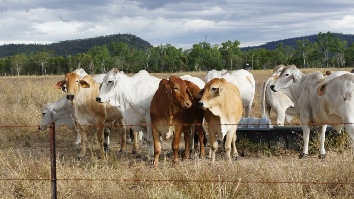 A cut above the rest: our contributions to the beef industry