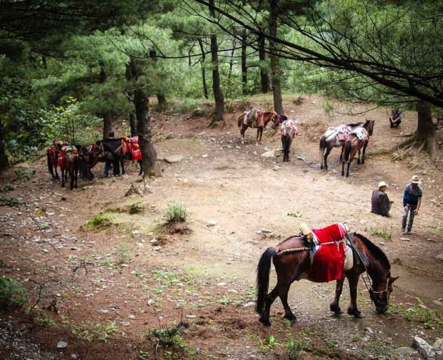 Horses/Mules near Dali