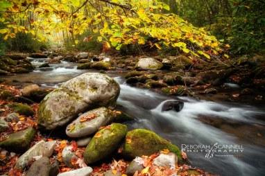 Golden River Rush