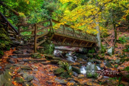 Mingo Falls Foot Bridge Autumn