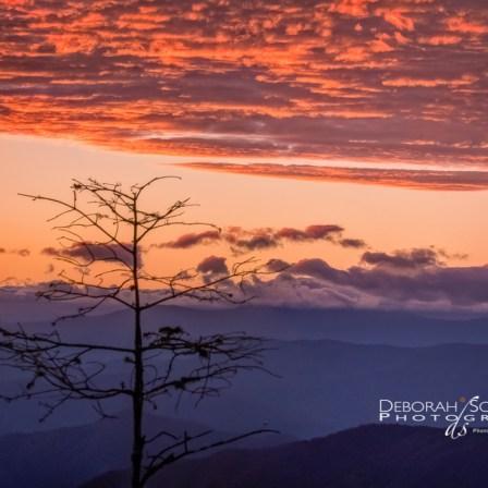 Persimmon Sunset