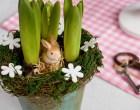 hyacint_nahled
