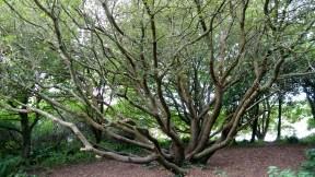 Oktopus-Baum