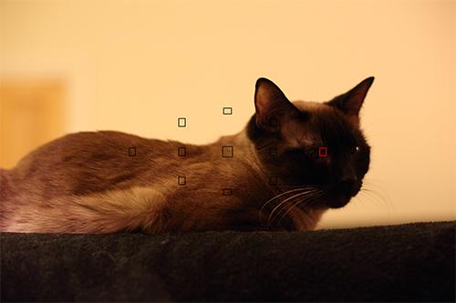 Canon 6d autofocus af low light auto focus system sample image center outer af point