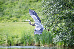 Canon_5DS-5DSR_Experience-Heron-2