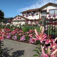 The Flower House on Vassault
