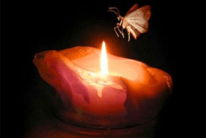 Moth and Flame