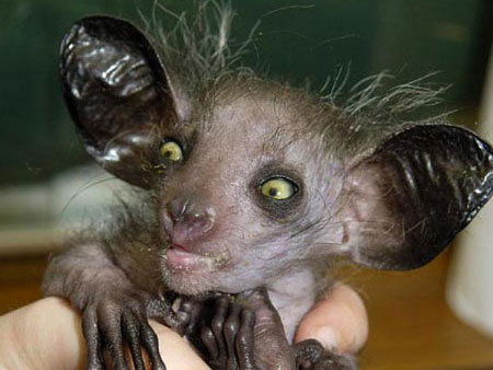 10 Crazy-Looking Animals (That Aren't Photoshopped!)